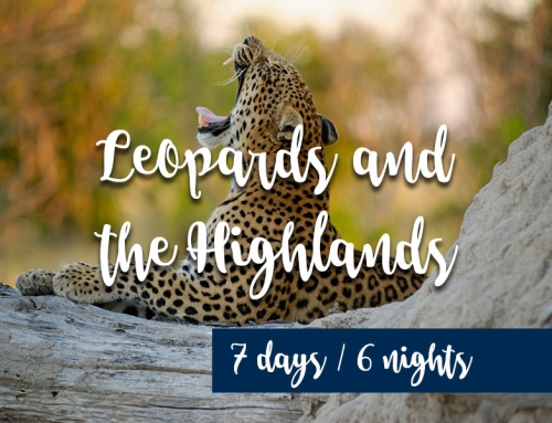 Leopards and the highlands