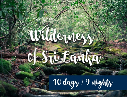 Wilderness of Sri Lanka