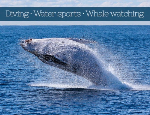 Diving, Water sports and Whale watching