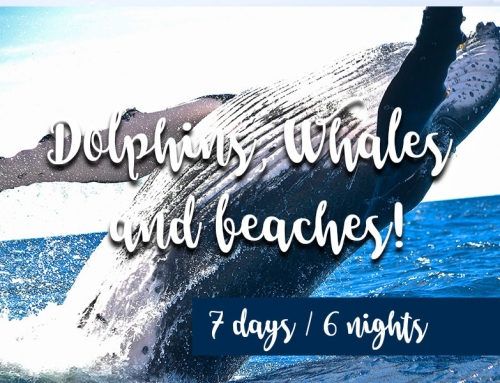 Dolphins, Whales and beaches!