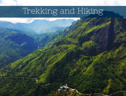 Trekking and Hiking